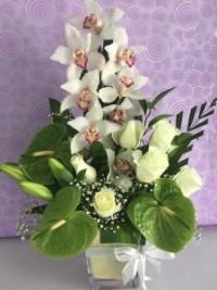 orchid anthurium roses
